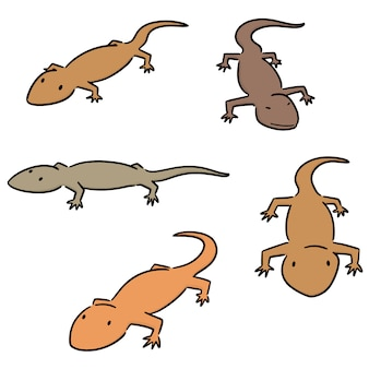 Vector set of lizards