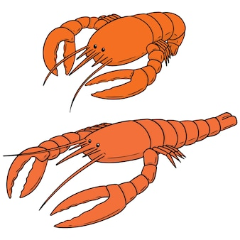 Vector set of lobster