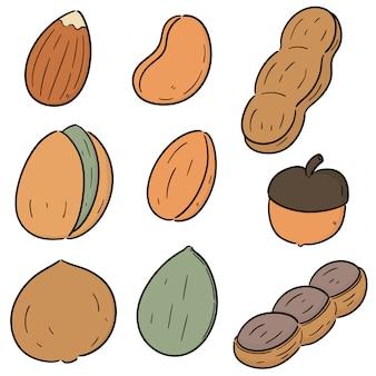 Векторный набор бобов и орехов Premium векторы