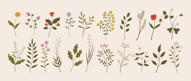 식물 빈티지 야생 허브 꽃 가지 잎의 벡터 세트