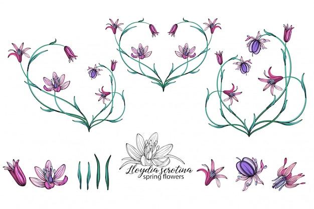 繊細な春の花のベクトルを設定します。フラワーズ。春の花。花の中心。