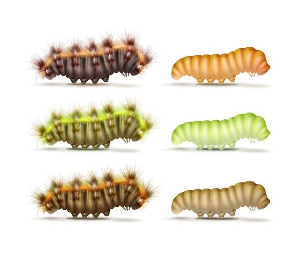 Векторный набор различных красочных зеленых, оранжевых, коричневых, пушистых и гладких гусениц, вид сбоку, изолированные на белом фоне