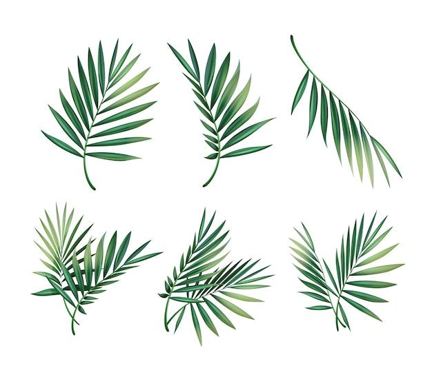 白い背景で隔離の異なる緑の熱帯ヤシの葉のベクトルセット