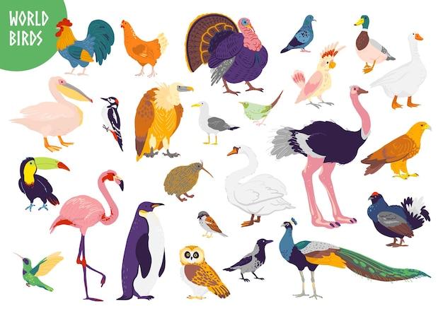 흰색 배경에 고립 된 평면 손으로 그린 세계 새 종류의 벡터 집합입니다. 수탉, 칠면조, 갈매기, 앵무새, 플라밍고 등. 어린이 책, 알파벳 그림, 인쇄, 동물원 로고, 배너.