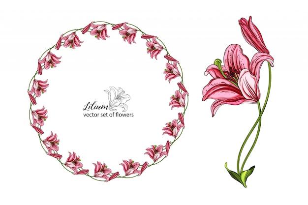 Векторный набор цветов и бутонов лилии.