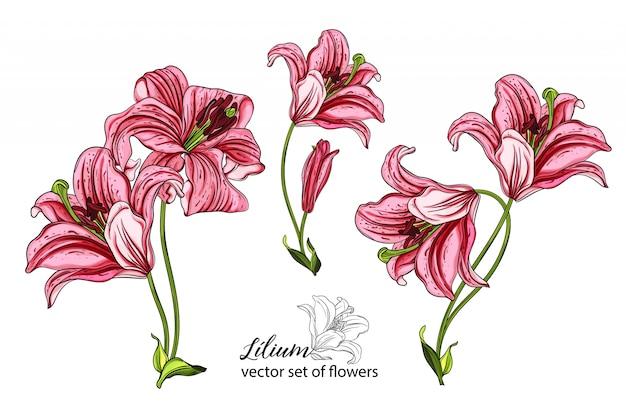 花とユリの芽のベクトルを設定します。