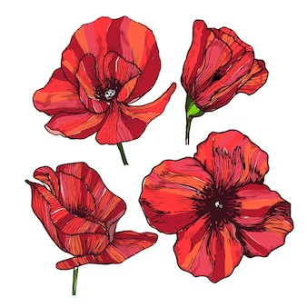 4 개의 매우 활기찬 붉은 양 귀 비 꽃 벡터 세트