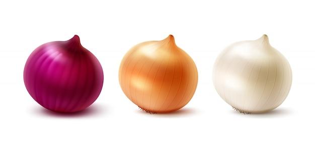 Векторный набор свежих весь желтый красный белый луковицы лука на белом