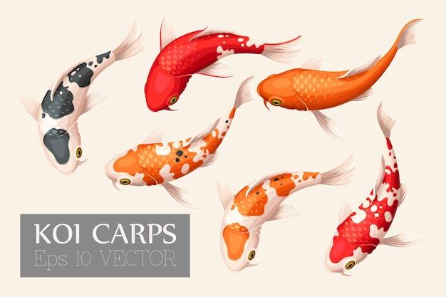 Векторный набор японской рыбы кои