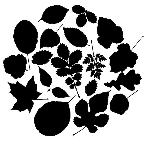 Векторный набор листьев силуэт
