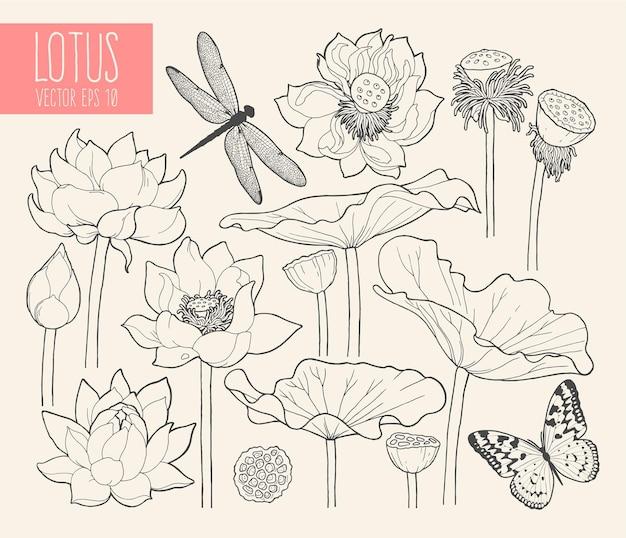 蓮の花と葉のベクトルセット
