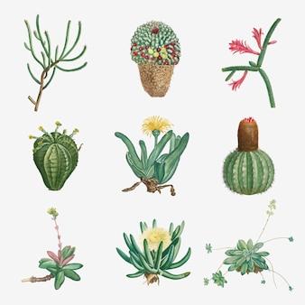 Векторный набор суккулентов и кактусов