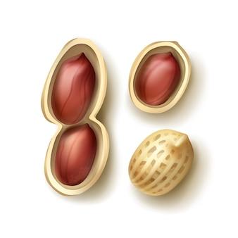 Векторный набор целого и очищенного арахиса с оболочкой крупным планом, вид сверху, изолированные на белом фоне
