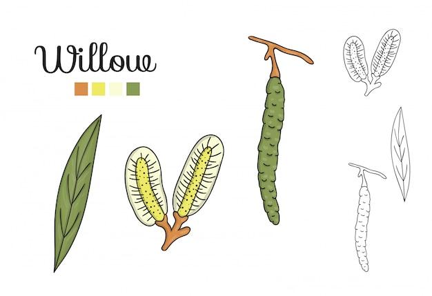 Векторный набор элементов дерева ивы изолированы. ботаническая иллюстрация листьев ивы, бранч, цветы, фрукты, ament. черно-белые картинки.