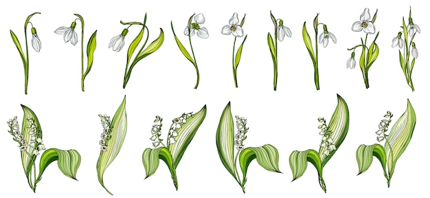 Vector set of snowdrop and lily of the valley colors