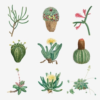 Vector set of succulents and cacti