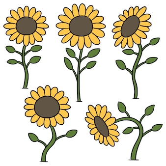 Vector set of sunflower