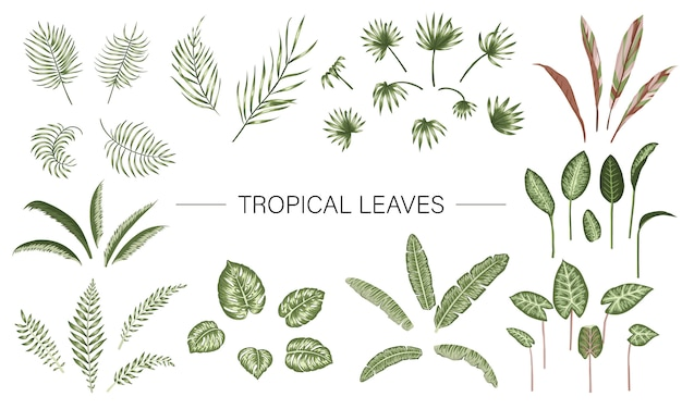 Vector set of tropical plant leaves.