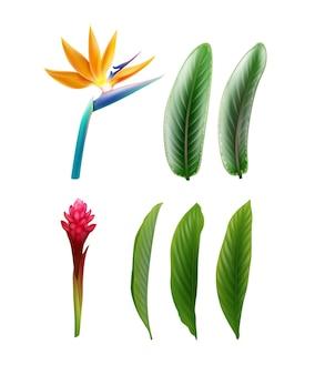 Insieme di vettore delle piante tropicali uccello del paradiso fiore o strelitzia reginae e alpinia purpurata con foglie isolati su priorità bassa bianca