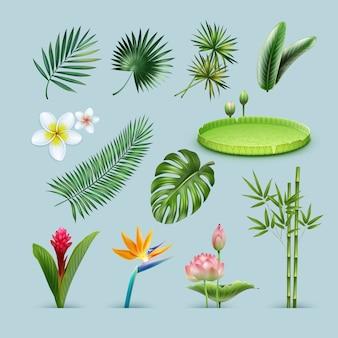Insieme di vettore di piante tropicali: foglie di palma, monstera, ninfea gigante dell'amazzonia, steli di bambù, uccello del paradiso, fiore di zenzero rosso e plumeria isolato su priorità bassa