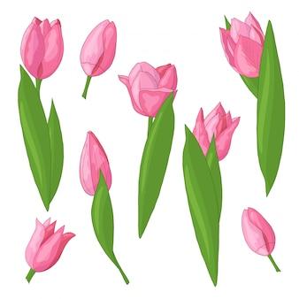 Vector set of tulips
