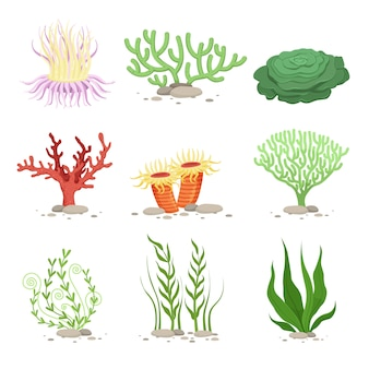 Vector set of underwater plants
