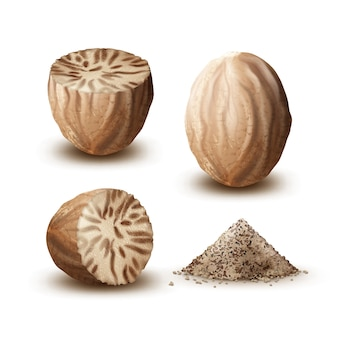 Vector set of whole and cut nutmegs close up side view isolated on white background