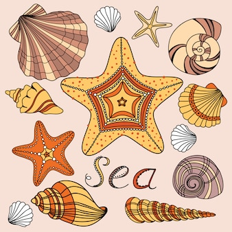Vector set with shells and starfish