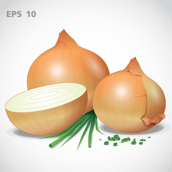 Vector set yellow onion