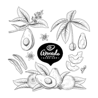 Vector sketch avocado decorative set.