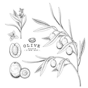 Векторный рисунок оливковый декоративный набор. рисованной ботанические иллюстрации. черный и белый с линией искусством, изолированные на белом фоне. завод чертежей. элементы в стиле ретро.