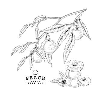 ベクタースケッチピーチ装飾セット。手描きの植物イラスト。黒と白の白い背景で隔離のラインアート。果物の絵。レトロなスタイルの要素。