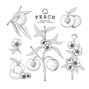 Vector sketch peach decorative set.