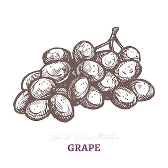 Vector sketch of wine grape brunch with. fresh juicy ripe berry fruit.