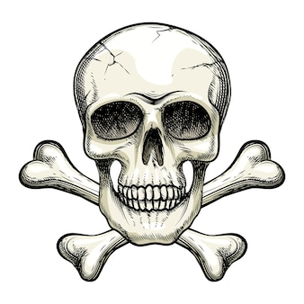Vector skull and crossbones