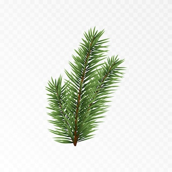 Vector spruce branch spruce branches png pine spruce christmas decorations