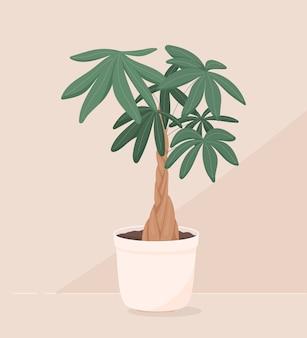鉢植えの家の植物のトレンディなイラストをベクトルします。お金の盆栽またはパキラアクアティカ。木製のトランクと大きな緑の葉。装飾用のオブジェクト。