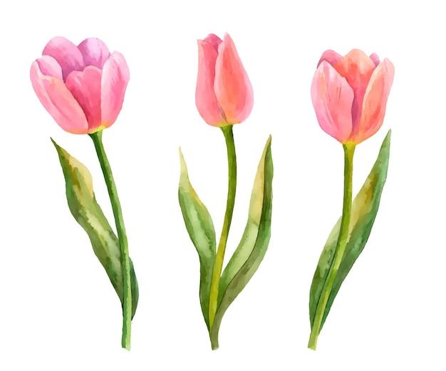 白で隔離春の花の花の要素のベクトルチューリップ手描きイラスト