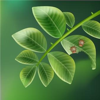 Вектор два колорадских жуков на листе картофеля с размытым зеленым фоном сверху