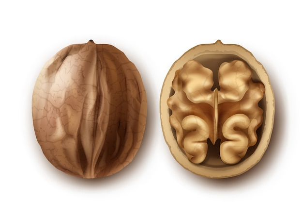 Vector two whole and cracked walnuts close up side view isolated on white background