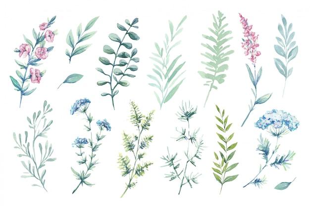 벡터 수채화 삽화. 식물 클립 아트. 녹색 잎, 나물 및 분 지의 집합입니다.