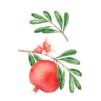 녹색 잎과 새싹 손으로 그린 나뭇가지에 벡터 수채화 붉은 석류