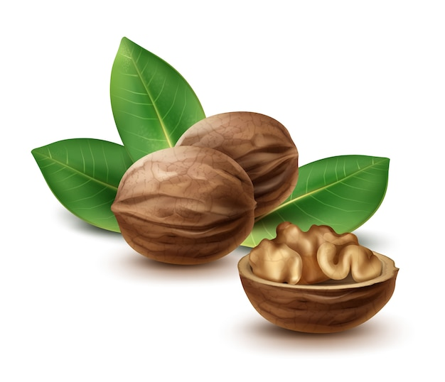 Vector whole and half walnuts with leaves close up side view isolated on white background