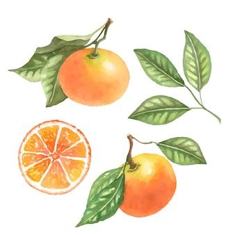 Vectorrtangerine果物の手描きイラスト