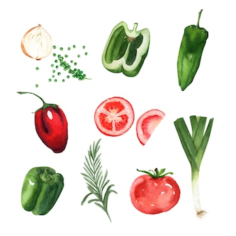 Vegetable element design watercolor