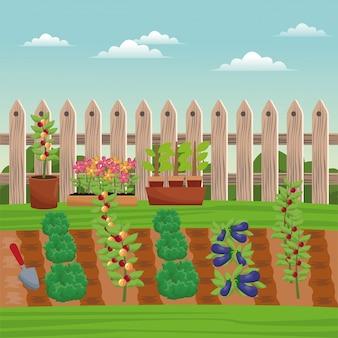 Овощеводство