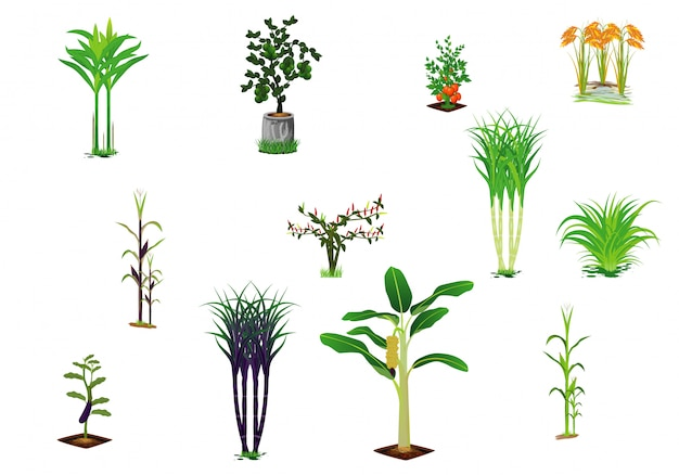 Vegetable plant vector design