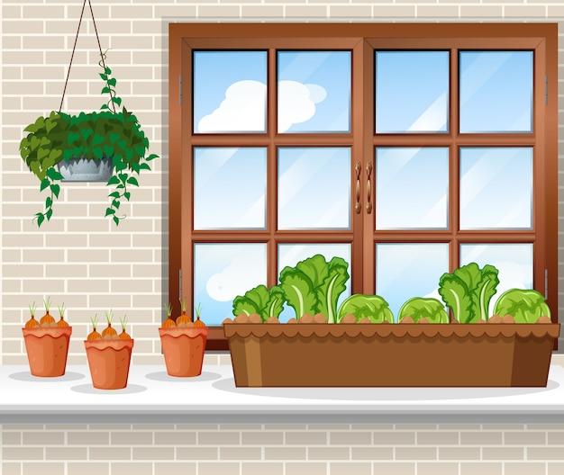 Овощные растения с окном фоновой сцены