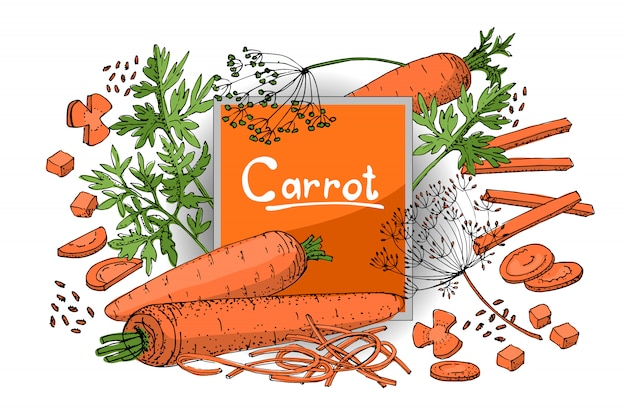 Vegetable sketch. a set of carrots of different types. orange roots, green carrot tops and seeds.