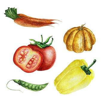 Овощная коллекция акварелей